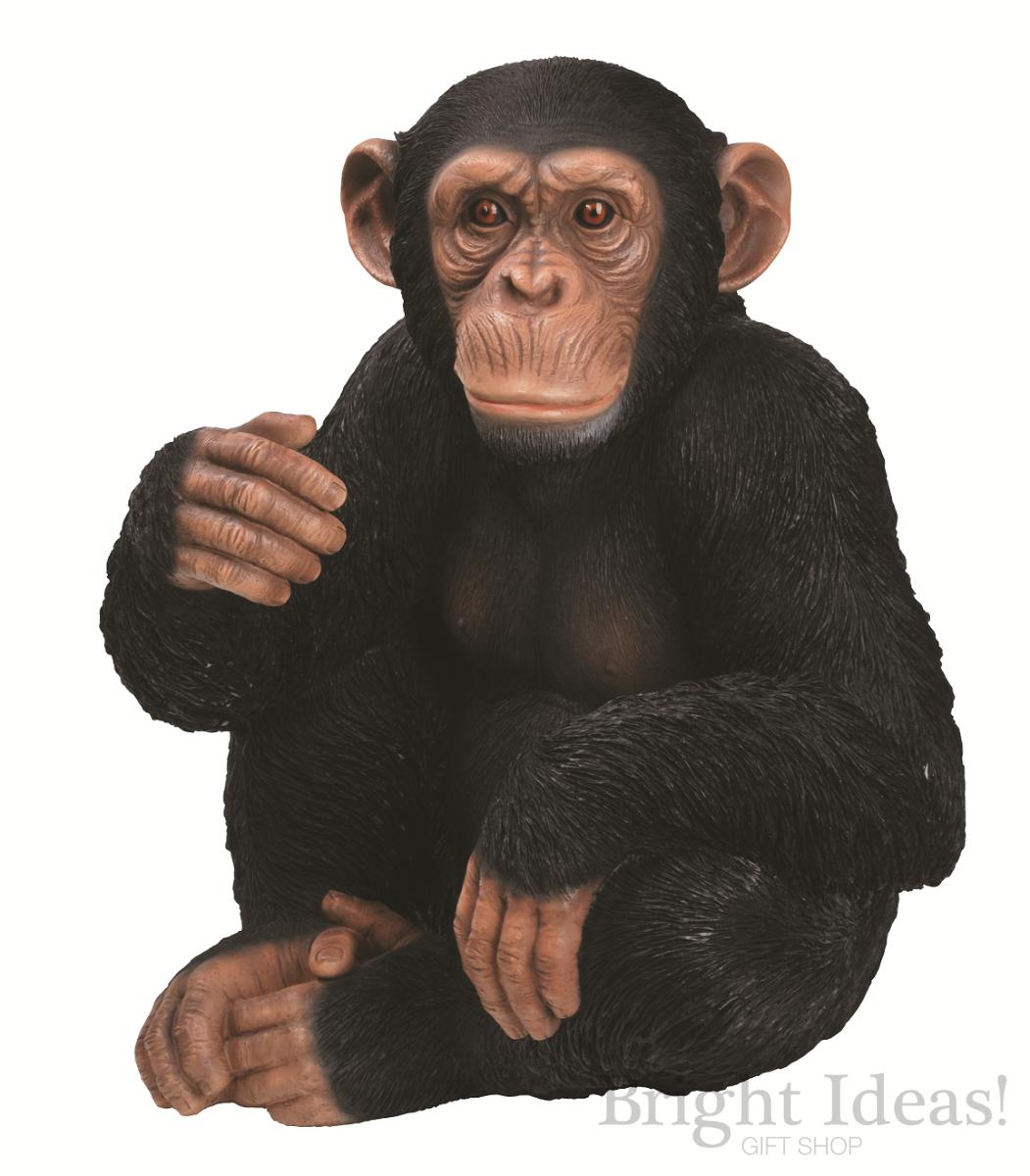 Chimpanzee looking cool | A chimpanzee sitting in the ...  |Chimp Sitting