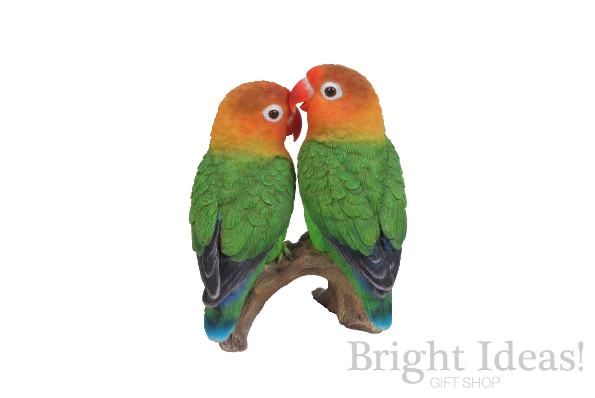 Love Birds Exotic Real Life Birds