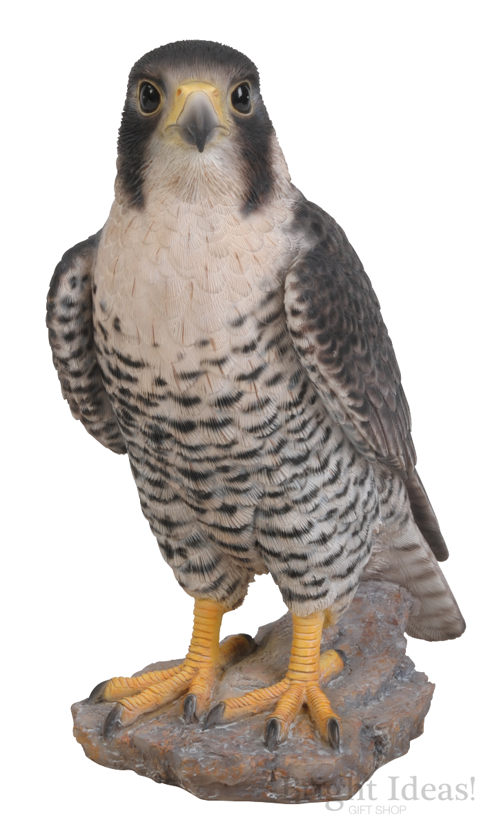 Peregrine Falcon Real Life Birds Of Prey By Vivid Arts