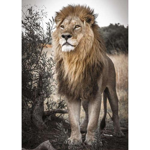 18523 Proud Lion Jigsaw puzzle Jumbo wildlife