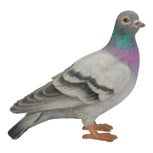 XRL-PGON-D pigeon real life british bird vivid art